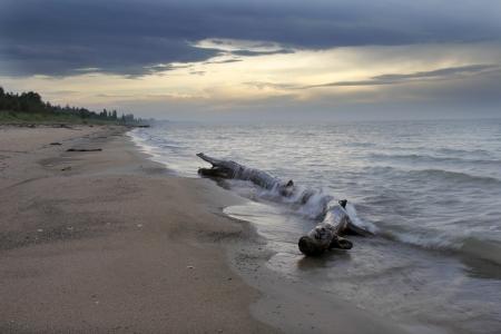huron: Waves Crashing Over Driftwood on a Lake Huron Beach - Ontario, Canada