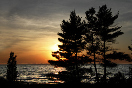 pinery: White Pines  Pinus strobus  on Shore of Lake Huron at Sunset - Pinery Provincial Park, ON, Canada