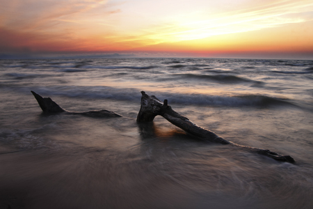 Driftwood on Lake Huron Beach at Sunset - Pinery Provincial Park, ON, Canada