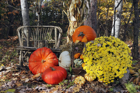 Colorful Thanksgiving Display of Pumpkins, Gourds, Flowers and a Twig Chair at Forest Edge - Ontario, Canada photo