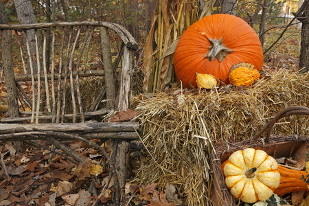 Thanksgiving Display of Pumpkin and Gourds with Twig Chair photo