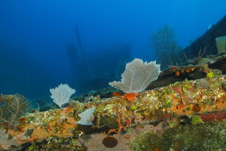 brilliant   undersea: Colourful Coral Encrusted Shipwreck - Roatan, Honduras Stock Photo
