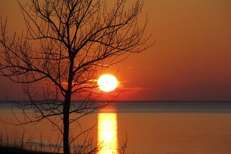 arbol alamo: Bare �rbol de �lamo silueteada por la puesta del sol el lago Hur�n en el oto�o - Ontario, Canad�