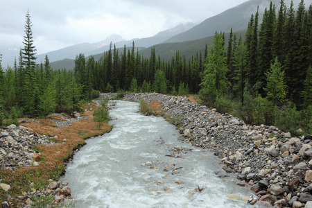 Mountain stream in Banff National Park - Alberta, Canada