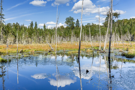 billowing: Beaver Pond with White Billowing Clouds Reflecting in the Water - Haliburton, Ontario