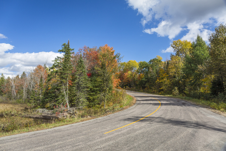 autumn colour: Winding Road in Autumn Lined with Fall Colour - Ontario, Canada