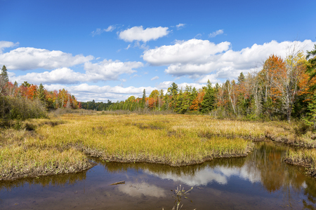 bordered: Autumn Bog Bordered by a Vibrant Forest - Ontario, Canada Stock Photo