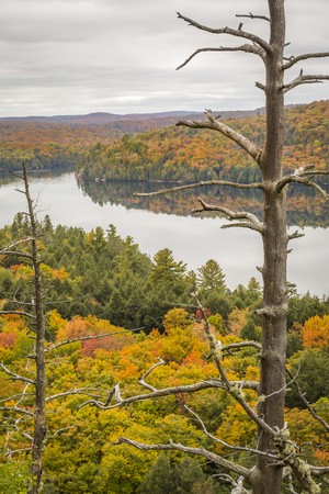 provincial forest parks: View overlooking a lake surrounded by  a forest in autumn - Algonquin Provincial Park, Ontario, Canada