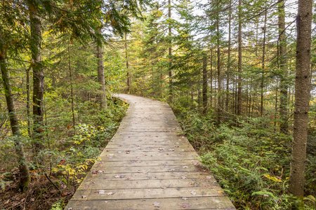 provincial forest parks: Boardwalk Leading Through a Coniferous Forest in Autumn - Algonquin Provincial Park, Ontario, Canada Stock Photo