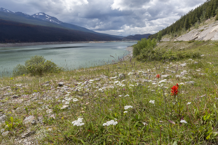 jasper: Medicine Lake in early summer with wildflowers growing in the foreground - Jasper National Park, Alberta, Canada