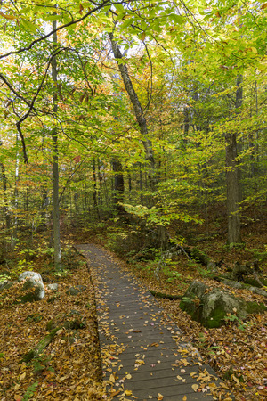algonquin park: Boardwalk through a fall forest - Algonquin Provincial Park, Ontario, Canada