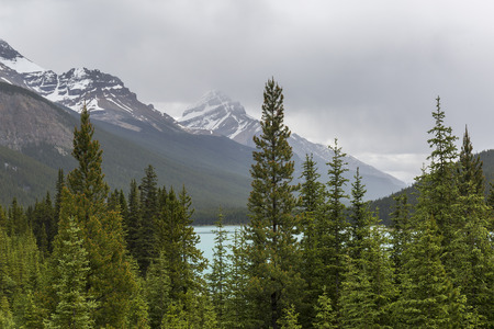 Boreal Forest met Athabasca River en Rocky Mountains op achtergrond - Jasper National Park, Alberta, Canada Stockfoto