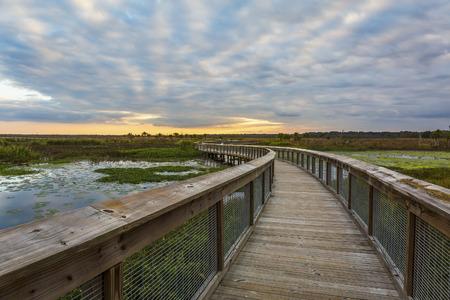 Boardwalk winding through a wetland in Gainesville, Florida
