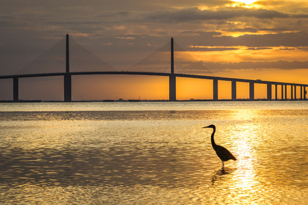 Great Blue Heron silhouetted at sunrise with the Sunshine Skyway Bridge in the background - Fort De Soto Park, St. Petersburg, Florida Foto de archivo