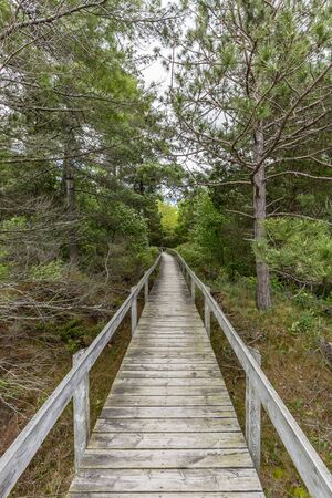 Boardwalk Through Oak Savanna Habitat- Pinery Provincial Park, Ontario, Canada