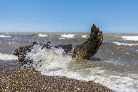 Wave crashing over driftwood and pebbles on a Lake Huron Beach - Pinery Provincial Park, Ontario, Canada