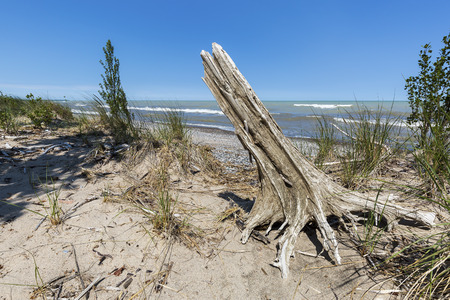 Sand dune with an eastern red cedar stump next to a Lake Huron shoreline - Pinery Provincial Park, Ontario, Canada