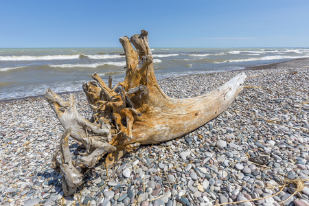 Driftwood and Pebbles on a Lake Huron Beach - Pinery Provincial Park, Ontario, Canada