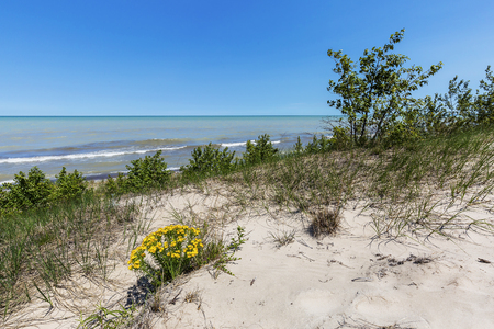 Sand Dune Ridge with Yellow Puccoon looking out over Lake Huron - Pinery Provincial Park, Ontario, Canada