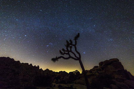 Joshua Tree and rock formations silhouetted against a star-studded night sky - Joshua Tree National Park, California Stock Photo