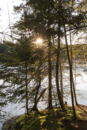 The morning sun bursts through a grove of balsam fir trees next to a beaver pond - Ontario, Canada 版權商用圖片