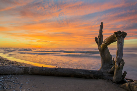 Driftwood on a Lake Huron Beach at Sunset - Pinery Provincial Park, Ontario, Canada 免版税图像 - 88493449
