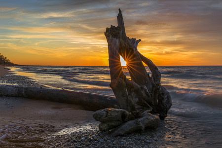 Driftwood on a Lake Huron Beach at Sunset - Pinery Provincial Park, Ontario