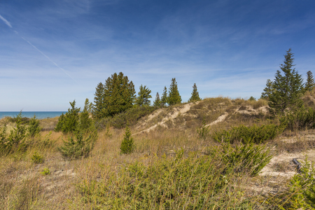 Red Cedar and Common Juniper growing on a sand dune ridge next to Lake Huron - Pinery Provincial Park, Ontario, Canada