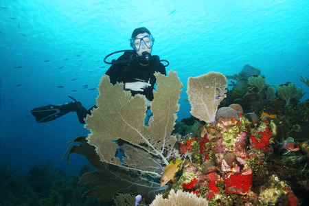Scuba Diver with Sea Fans in the foreground - Roatan, Honduras