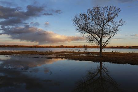 Sandhill Crane and pond at sunset - Bosque del Apache NWR, New Mexico