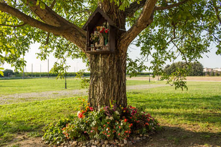 century plant: Votive aedicula devoted to the Blessed Virgin Mary on a tree near the medieval countryside church of Campanile, located in the village of Santa Maria in Fabriago in Emilia Romagna region in northern Italy