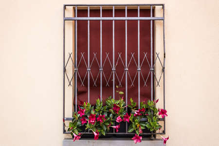 iron curtain: A window with dark red fabric curtain fenced by grey iron grating: a vase with fuchsia petunias flowers hanging down