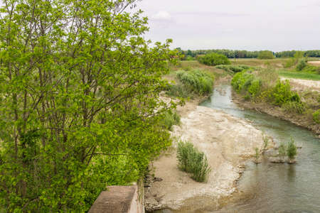 weeds: Trees and weeds on the Senio river near Cotignola in Italian countryside Stock Photo