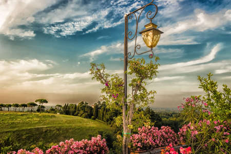 vineyard plain: Lamp, Flowers, green weeds, leaves, plants and trees on colorful sunset on vineyards backgrounds on cultivated hills in Italian countryside the small village of Dozza near Bologna in Emilia Romagna