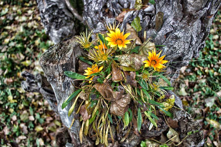 yellow flowers on light grey trunk on green blades grass and brown curly leaves carpet