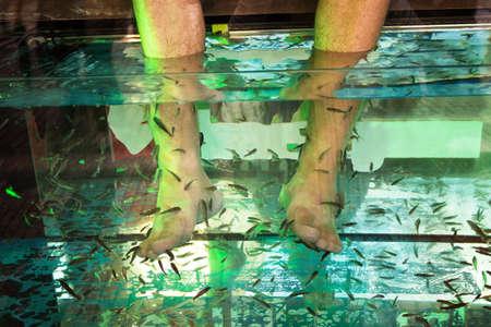 exfoliate: little Garra Rufa fishes exfoliate feet in a fish spa pedicure