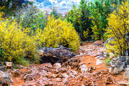pilgrim journey: Footpath in Autumn View of the Krizevac (Cross) Mountain in Medjugorje in Bosnia ed Erzegovina: brownish trees, green weeds, orange and yellow leaves and grey rocks Stock Photo