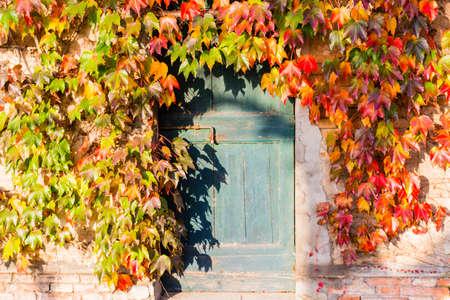 赤、緑とオレンジの秋のフレーミングとイタリアの田舎の典型の農家住宅でさびたボルトと古いグランジ ドアを取り巻く日本のクリーパーやナツヅ