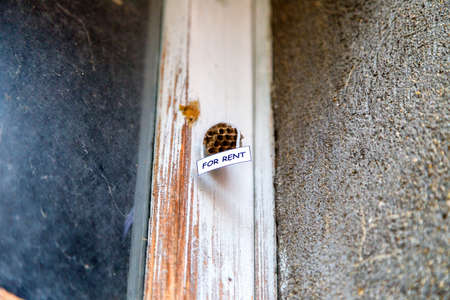 house for rent: Abandoned beehive with hanging for rent sign as  a house for rent