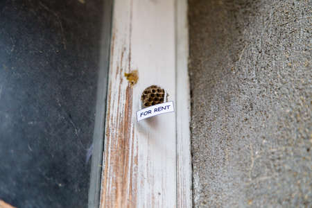 """house for rent: Abandoned beehive with hanging """"for rent"""" sign as  a house for rent"""