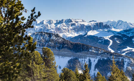 conifers: panorama of the Dolomites with snow-capped peaks and green conifers