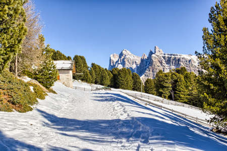 conifers: panorama of the Dolomites with wood cottage,  snow-capped peaks and green conifers