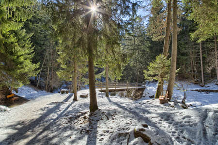Snowy walk path on wood bridge in a forest of green pines, spruces and firs on Dolomites in winter photo