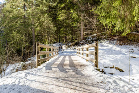 Brown walk path on wood bridge in a forest of green pines, spruces and firs on Dolomites in winter photo