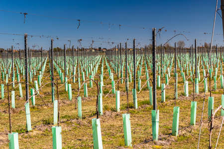 planted: fields of newly planted orchards and organized into geometric rows according to the modern agriculture
