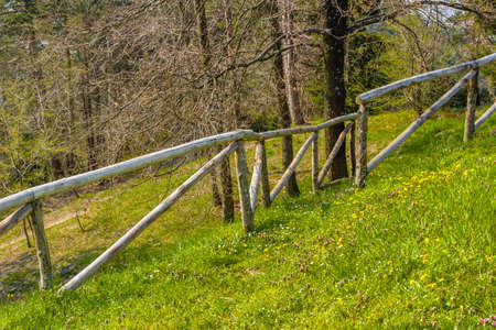 grassy: grassy slope. wooden fence and green trees in the countryside of Romagna Italy