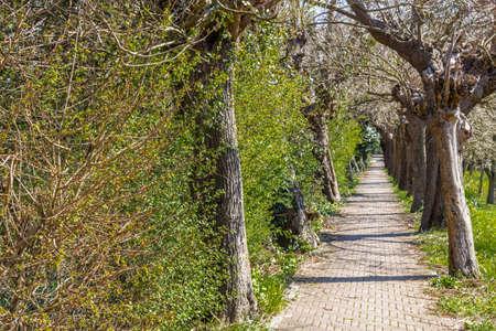 empedrado: camino pavimentado a trav�s de los �rboles en un parque en el pa�s italiano Foto de archivo