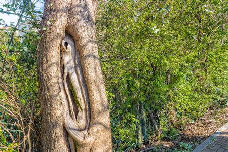 cavities: tree trunk with cavities on green weeds