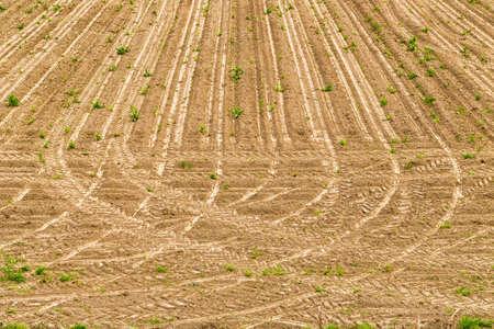 tire marks: Tire marks tractor on farmland