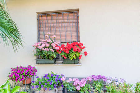 petunias: window with irong grating and flower pots: red and pink geranium, fuchsia and purple petunias